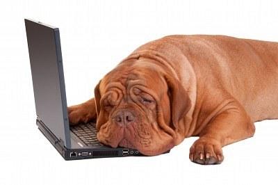 chien-fatigue-apres-une-longue-journee-au-travail